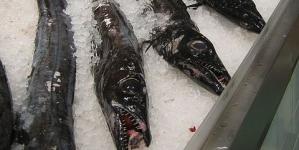 Governo dos Açores discorda de proposta de regulamento europeu sobre pescas
