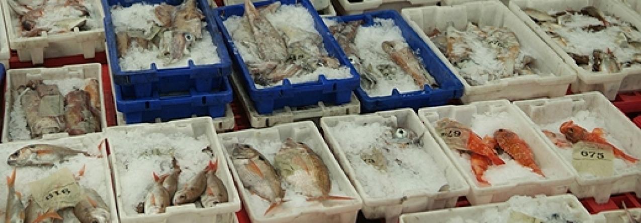 Pescadores propõem plano para repor 'stocks' de espécies demersais nos Açores