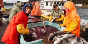O bacalhau da Terra Nova está a recuperar