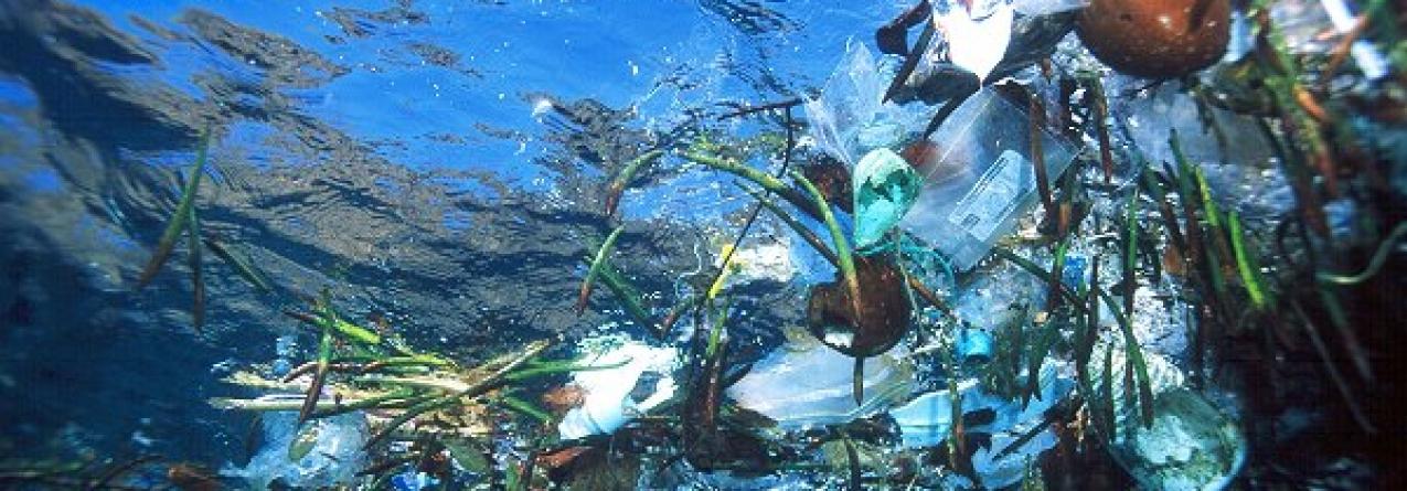Produtos biodegradáveis não vão reduzir volume de plástico dos oceanos
