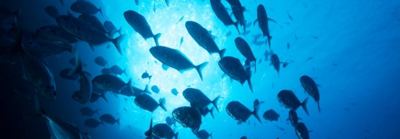 A cooperativa Porto de Abrigo e APEDA propõe redução da pesca do goraz, alfonsim, imperador, abrótea e pargo