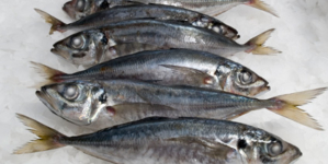 Pesca de carapau em águas portuguesas sobe e robalo deverá ficar interdito na UE