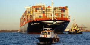 Atum rabilho do Atlântico: WWF recomenda cautela contra o excesso de otimismo