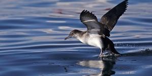 SPEA // 10 Anos a seguir aves marinhas