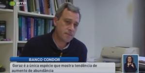 Há mais goraz no Banco Condor (vídeo)
