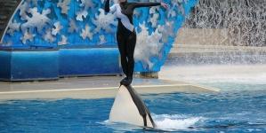 SeaWorld: Parque de San Diego vai por fim aos espetáculos com orcas até ao final de 2016
