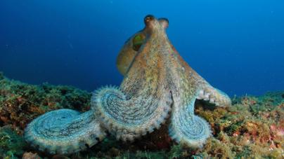 10 Prioridades para os oceanos em 2016