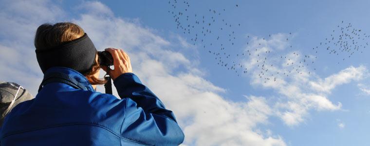 Entre Peniche e as Berlengas passaram mais de 300 mil aves em quatro meses