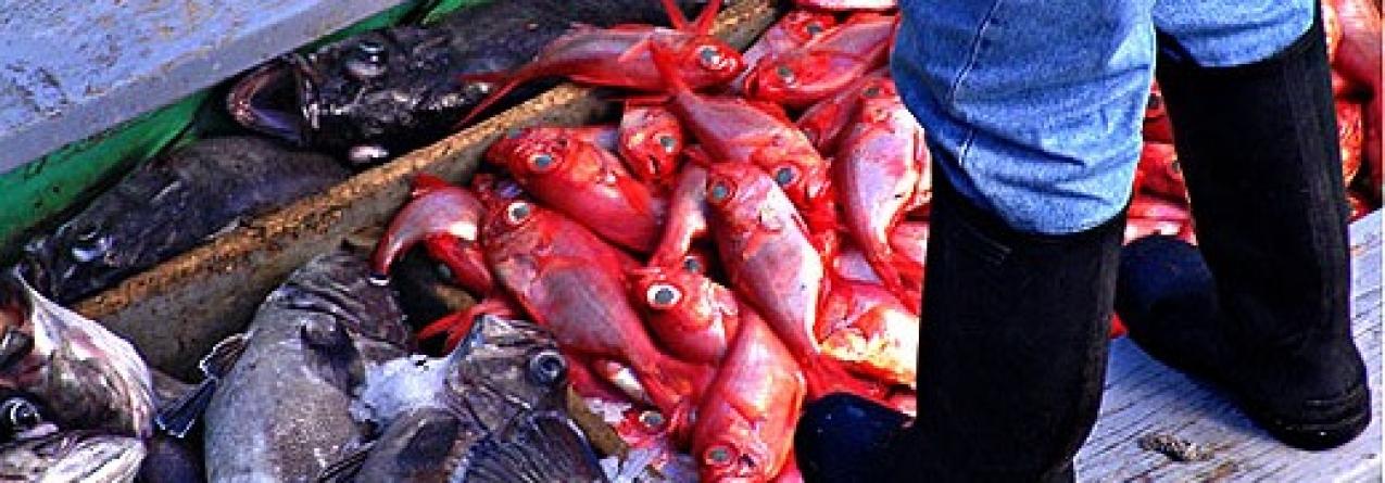 Pescadores açorianos exigem que FundoPesca pague um salário mínimo devido ao mau tempo