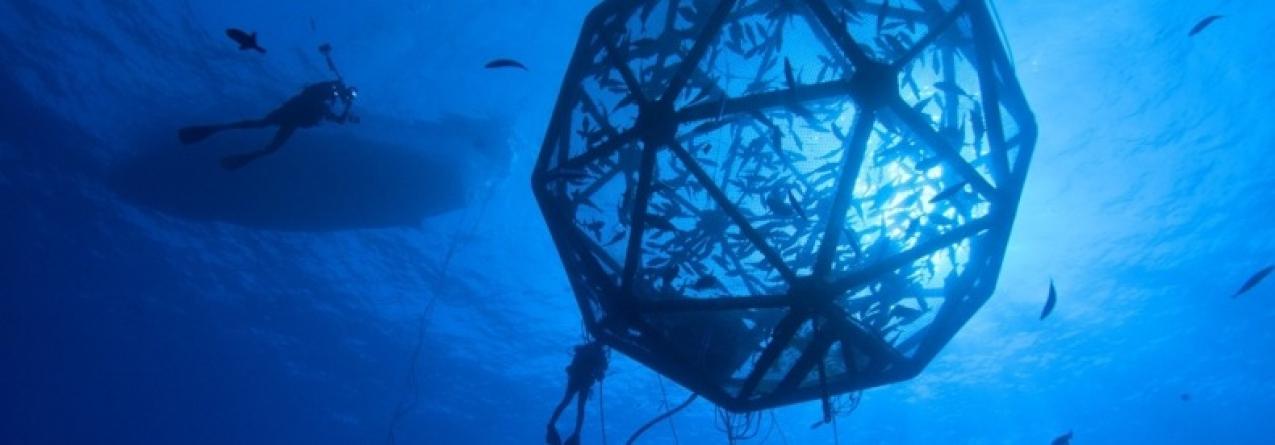 Investidores americanos nos Açores para avaliarem investimento em aquacultura