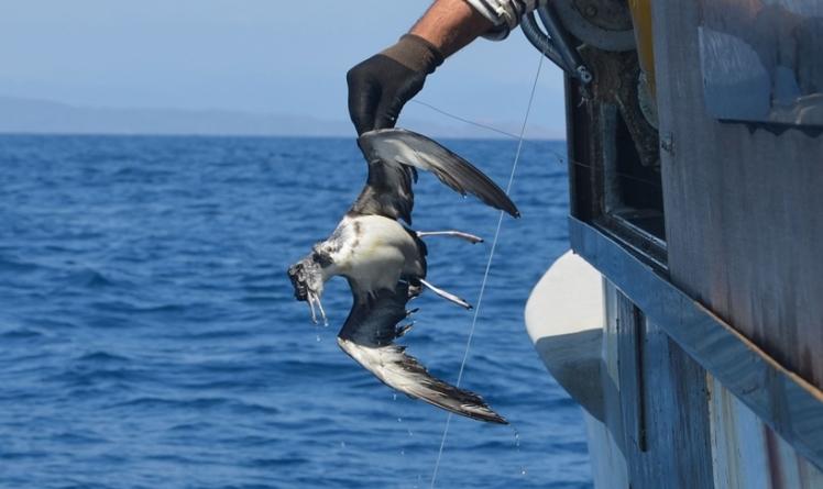 Cientistas testam alertas de luz e som para proteger aves das redes de pesca