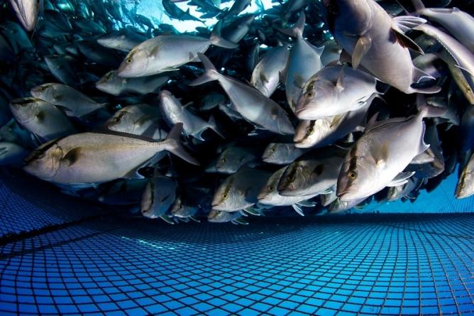 Portugal // 506 milhões de euros para aquacultura e pescas