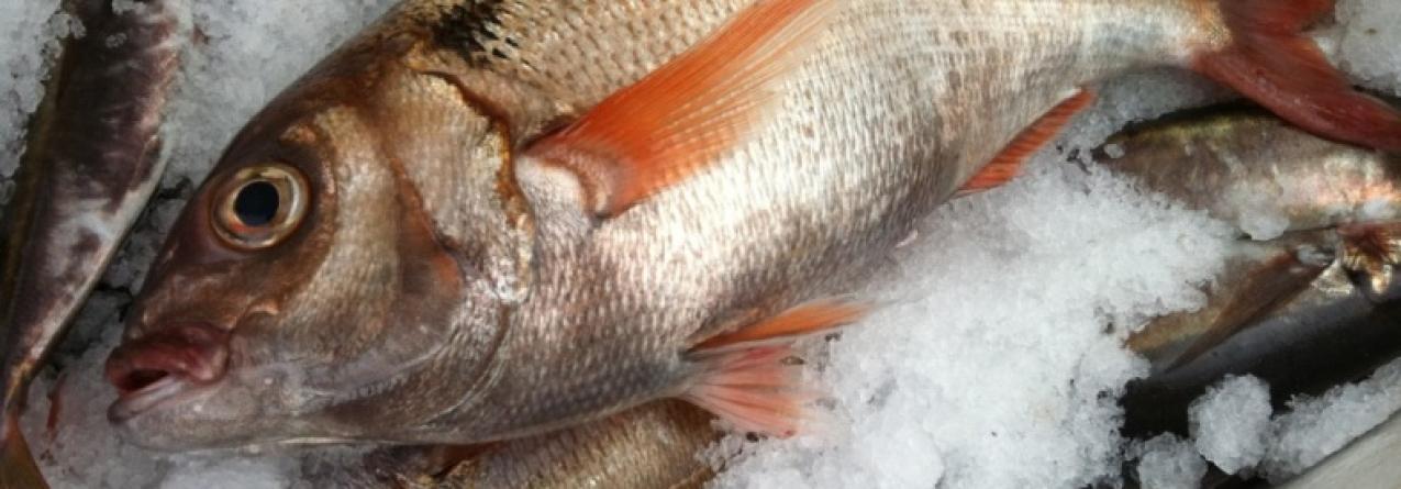 Período de defeso da pesca do goraz está a gerar polémica e pescadores da Região querem ser compensados