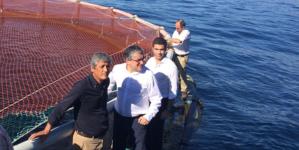 Açores // Empresários podem investir na produção de lírios e encharéus em aquacultura, além de larvas de altíssimo valor comercial