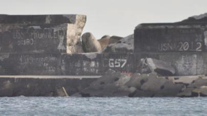 As necessidades de investimento identificadas no porto de Ponta Delgada ascendem a trinta milhões de euros