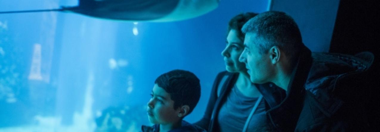 Oceanário de Lisboa comemorou 20 milhões de visitantes