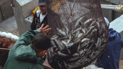 E se durante 10 anos não se pescasse sardinha?