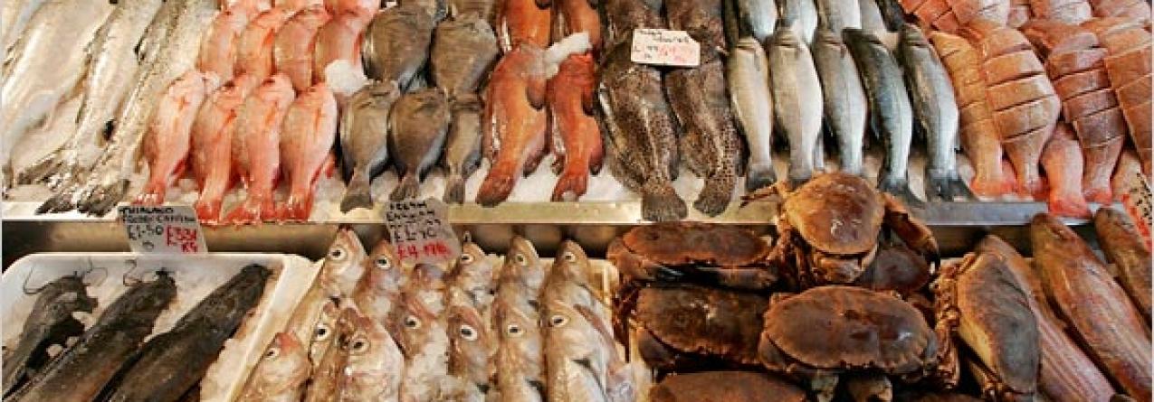 Comércio mundial de pesca diminuiu 10% em 2015