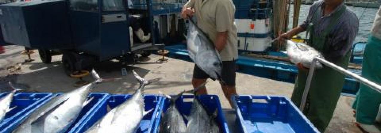 Quebra de 13% no valor do pescado vendido nas lotas dos Açores