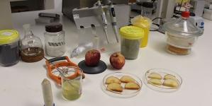 Investigadores do Instituto Politécnico de Leiria, em parceria com empresa, desenvolvem revestimento de origem marinha