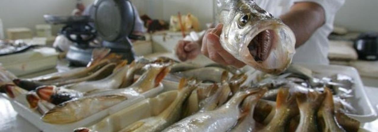 Espanha certificada pelo controle de pescado