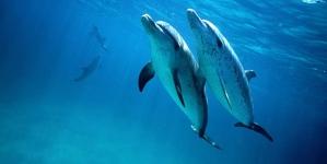 Entender os golfinhos para comunicar com extraterrestres?