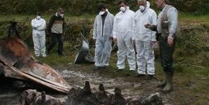 Exumação de esqueleto de cachalote para exposição é projeto pioneiro nos Açores