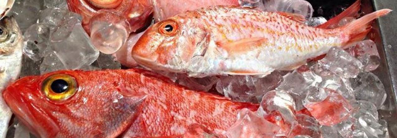 Açores // Parceiros das pescas subscrevem venda direta de pescado