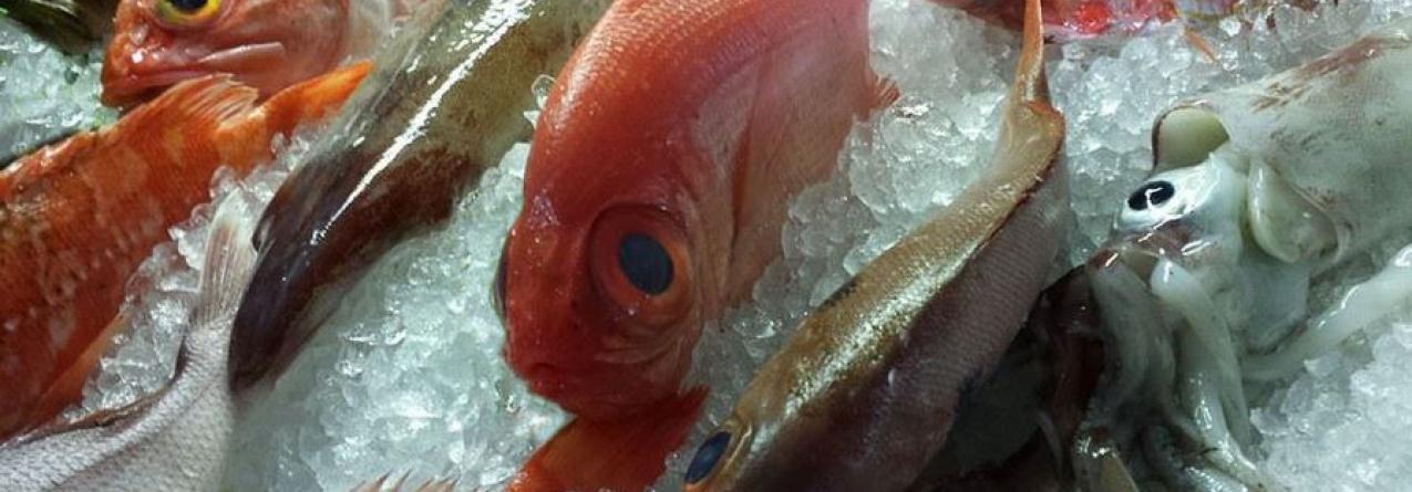 Valor do peixe na lota dos Açores no primeiro trimestre do ano ultrapassou em 79 mil euros o do mesmo período de 2014