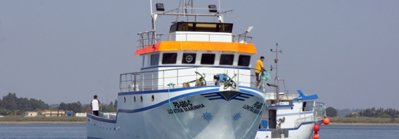 ICCAT: Madeira avalia recursos de tubarões e atum
