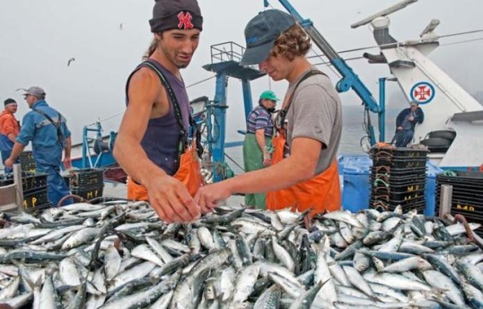 Pescadores satisfeitos com primeira safra de sardinha do ano