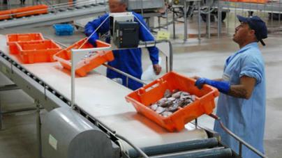 Pescado português. Rastreabilidade e informação ao consumidor