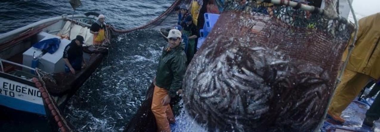 Faina da sardinha regressa com barcos cheios (som)