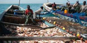 """Pescas: Eurodeputados aprovam """"maior acordo para as pescas"""" da história da União Europeia, com Mauritânia"""