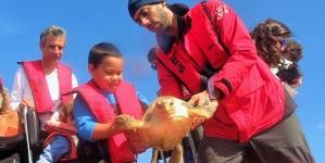 Tartarugas marinhas que estiveram em recuperação no Aquário do Porto Pim foram hoje libertadas
