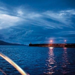 Governo dos Açores assinala Dia Mundial dos Oceanos com campanha de monitorização de aves marinhas