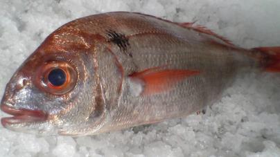 Diploma da primeira venda de pescado lança bases para mudança de paradigma nas pescas dos Açores, afirma Brito e Abreu