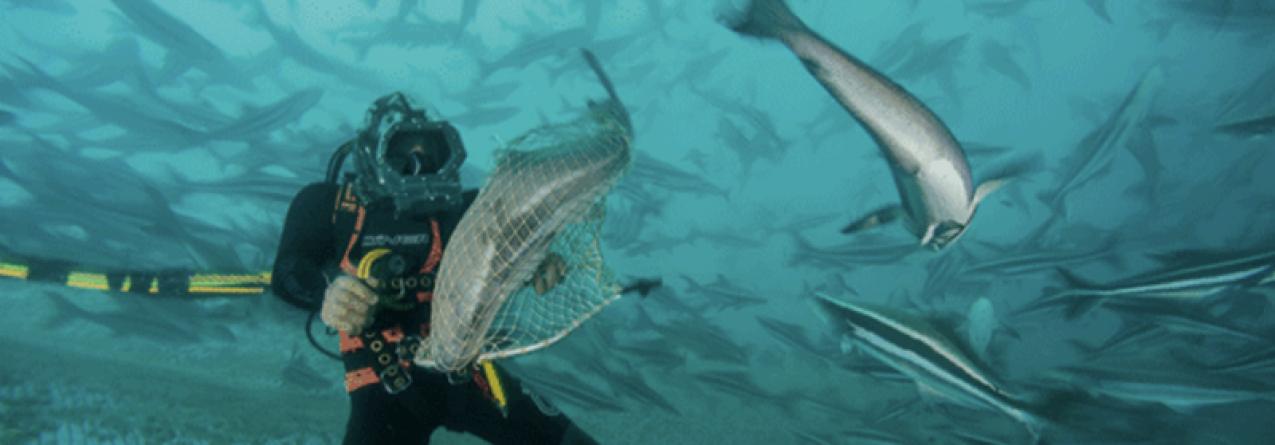 No mundo, já se produz mais peixe em aquicultura do que carne de vaca… e estamos apenas no princípio.