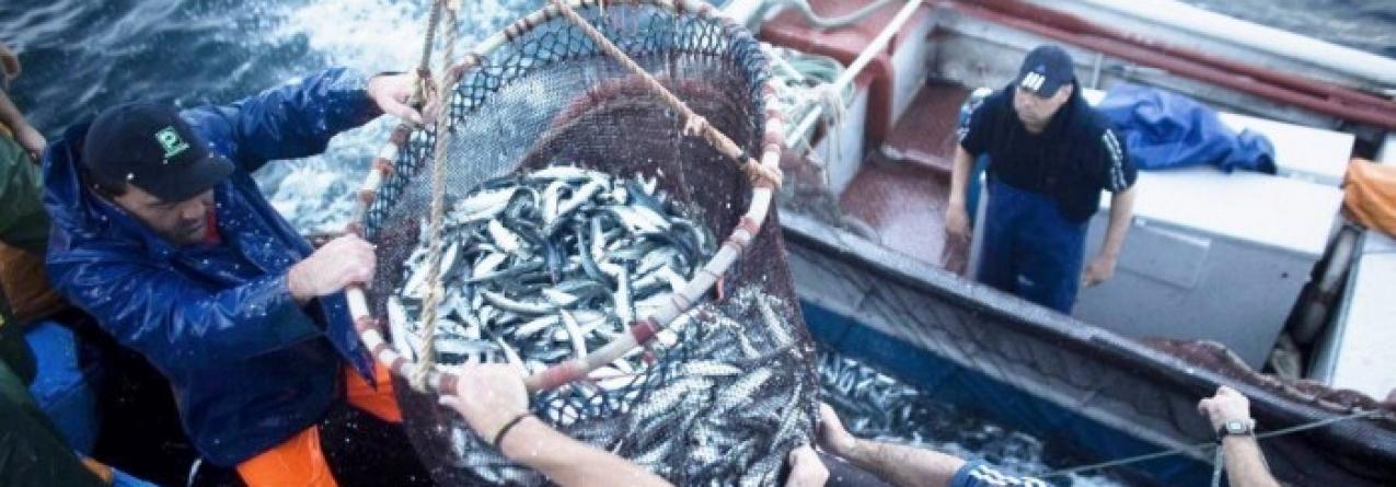 Continente assina contrato com embarcações de pescadores nacionais para compra de toda a sardinha