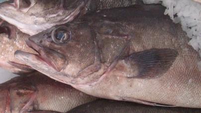 Diploma que regulamenta primeira venda de pescado fresco nos Açores publicado em Diário da República
