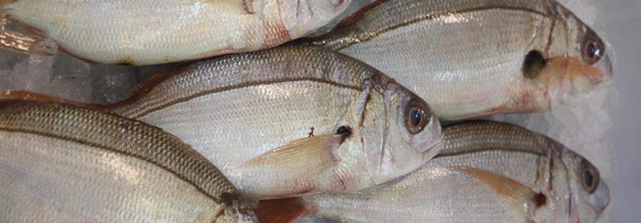 Pesca dirigida ao goraz suspensa em São Miguel de 28 de julho a 30 de setembro