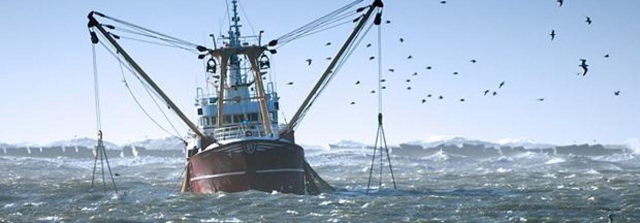 Uso de redes de arrasto proibido abaixo dos 800 metros de profundidade