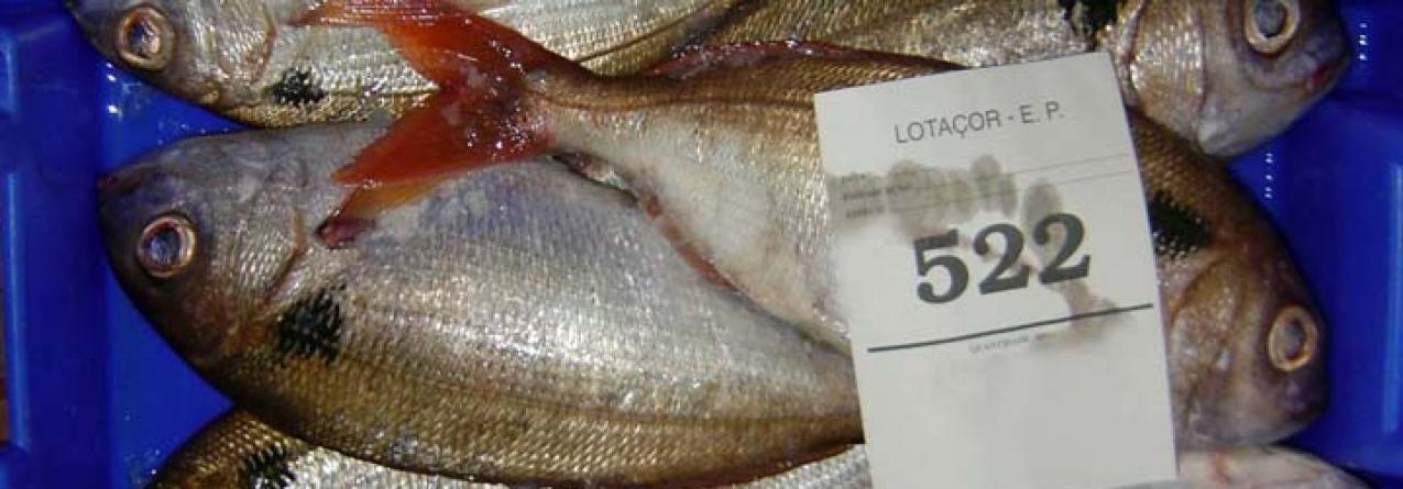 Inspeção Regional das Pescas efetuou mais de 700 inspeções no primeiro semestre de 2016