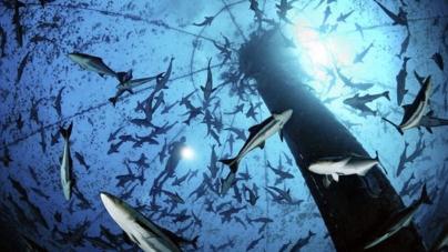Aquacultura representa mais de metade do pescado para consumo