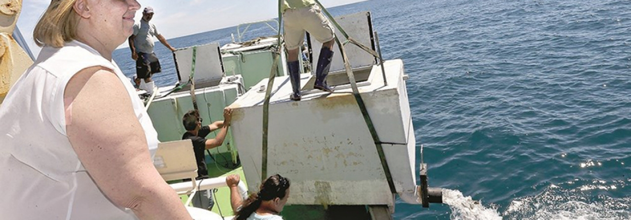 Peixes libertados no mar