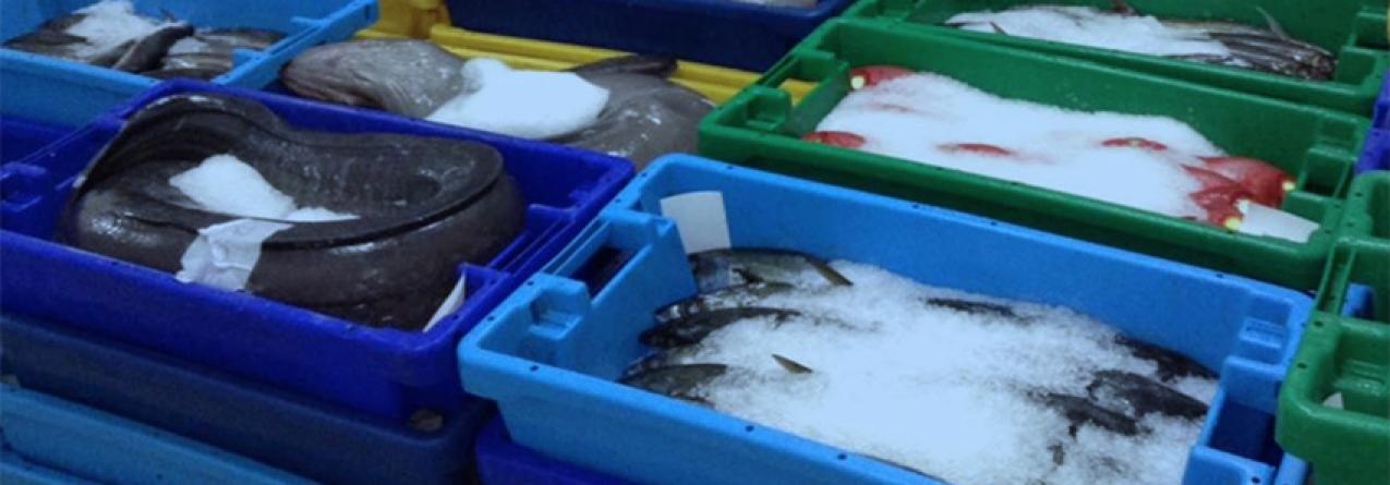 Açores // Pesca descarregada melhora em Julho… mas crise continua
