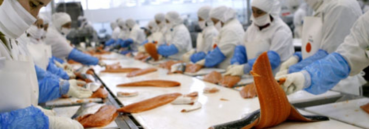 Pesquera Jaramillo vem a Portugal seleccionar exportadores de pescado e marisco