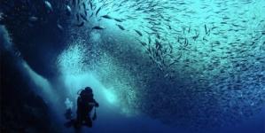 As ONGs ambientais apelam a uma ação urgente na melhor proteção do Oceano na Europa