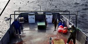 Governo dos Açores participa em consulta pública da UE sobre possibilidades de pesca para 2017