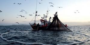 Algarve // Aquacultura 'rouba' melhores zonas de pesca